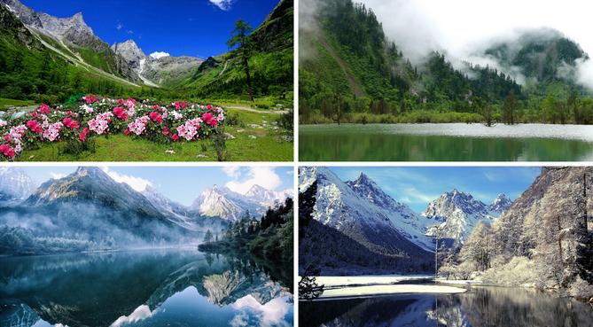 春天的时候,毕棚沟的羊角花开的遍地都是,雪山下,溪流边,湖泊旁